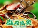 蟲森萬象甲蟲專門店 Discovery Beetles